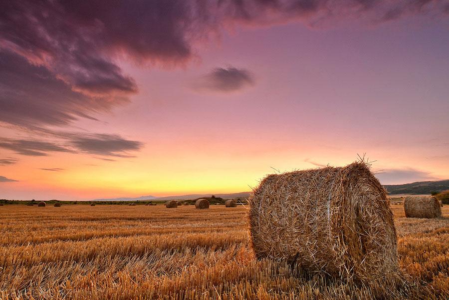 bales_after_harvest
