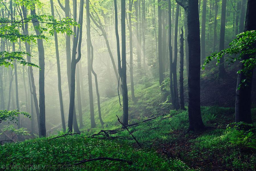 sunbeams_in_the_mist