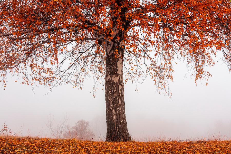 rhodope_fall_08